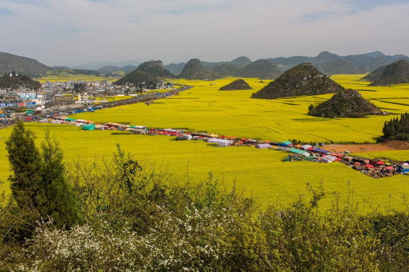 13-Luoping-Yunnan