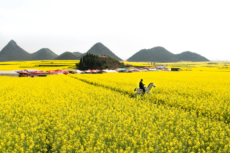 15-Luoping-Yunnan