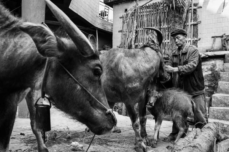 37-Yuanyang-Yunnan