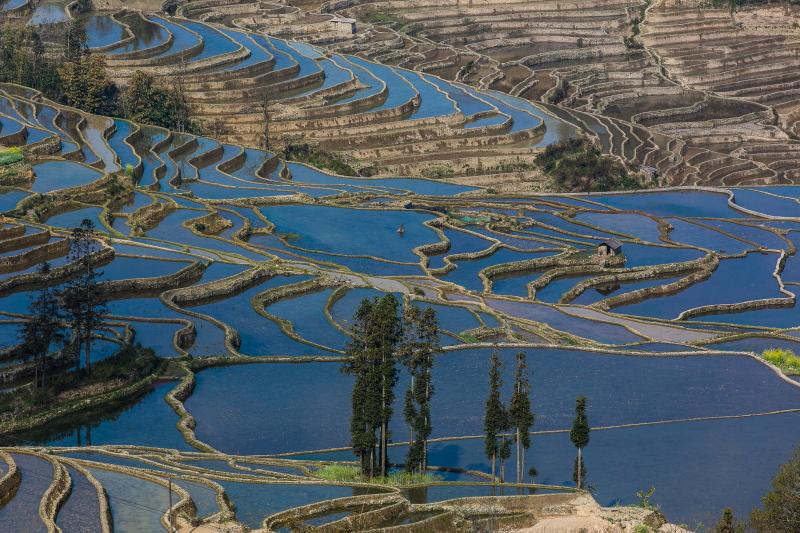 39-Yuanyang-Yunnan