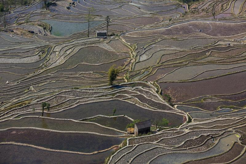 52-Yuanyang-Yunnan